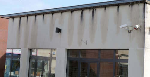 wall render black mould